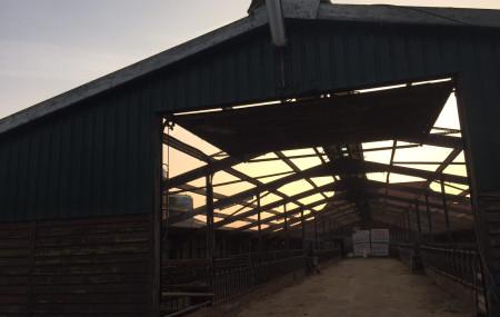 Asbestsanering van een Jongveestal op Ameland